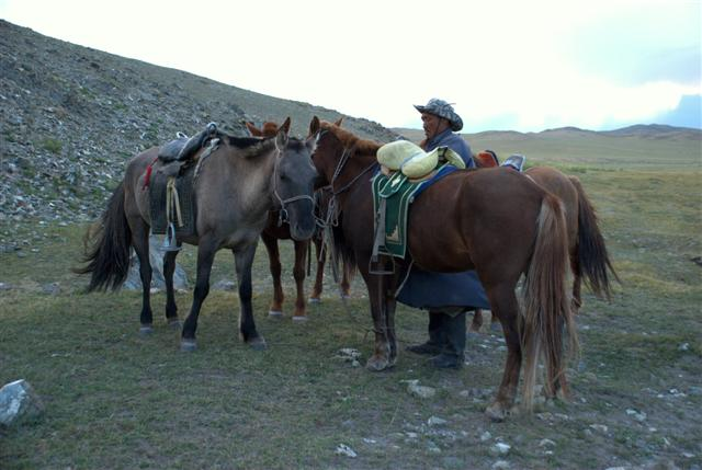 Horses (Small)