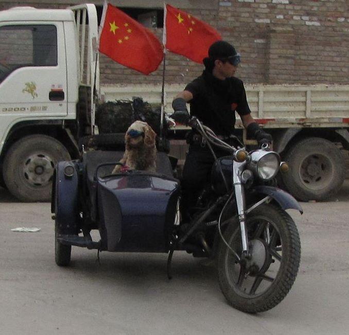 Bikeand dog