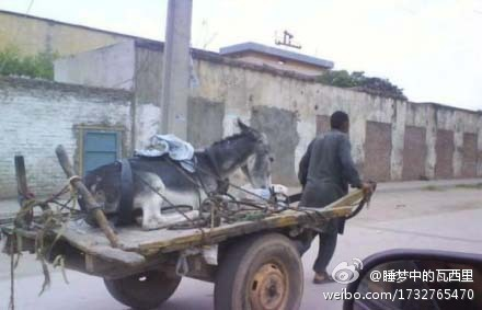 Donkey cart role reversal